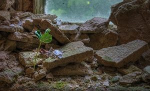 A young plant growing on a ledge in the Beelitz laundry